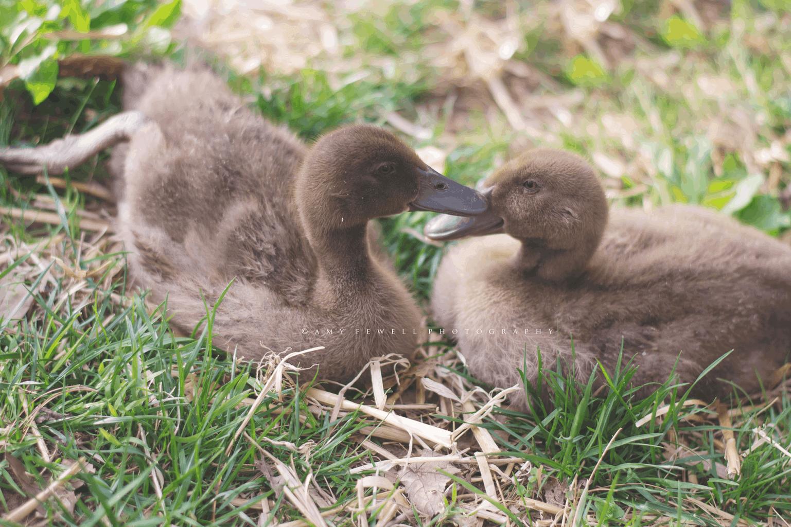 Wintertime Hatching