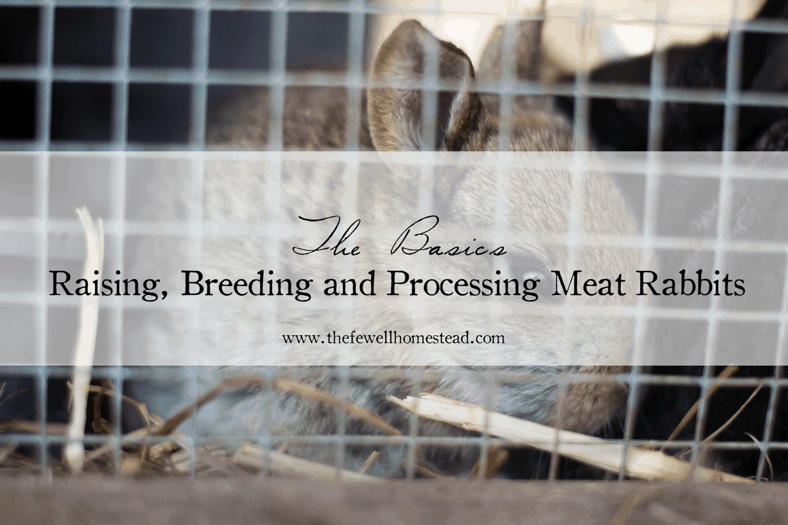 The Basics: Raising, Breeding and Processing Meat Rabbits