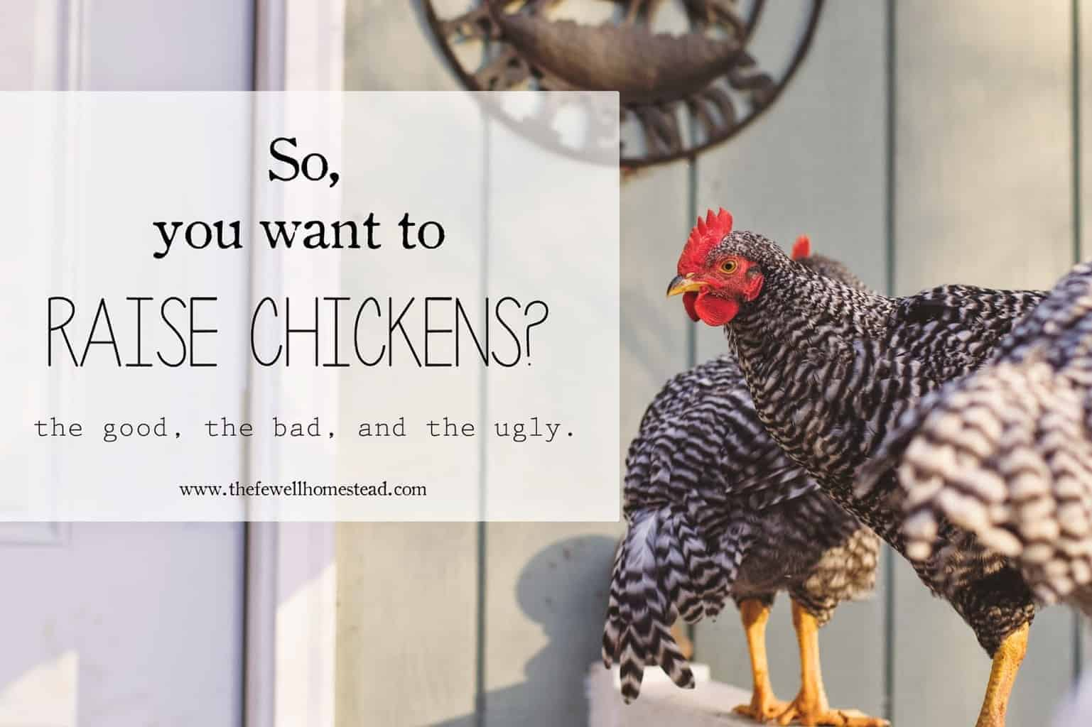 So, You Want to Raise Chickens? | The Good, The Bad, and the Ugly.