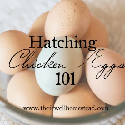 Hatching Chicken Eggs 101