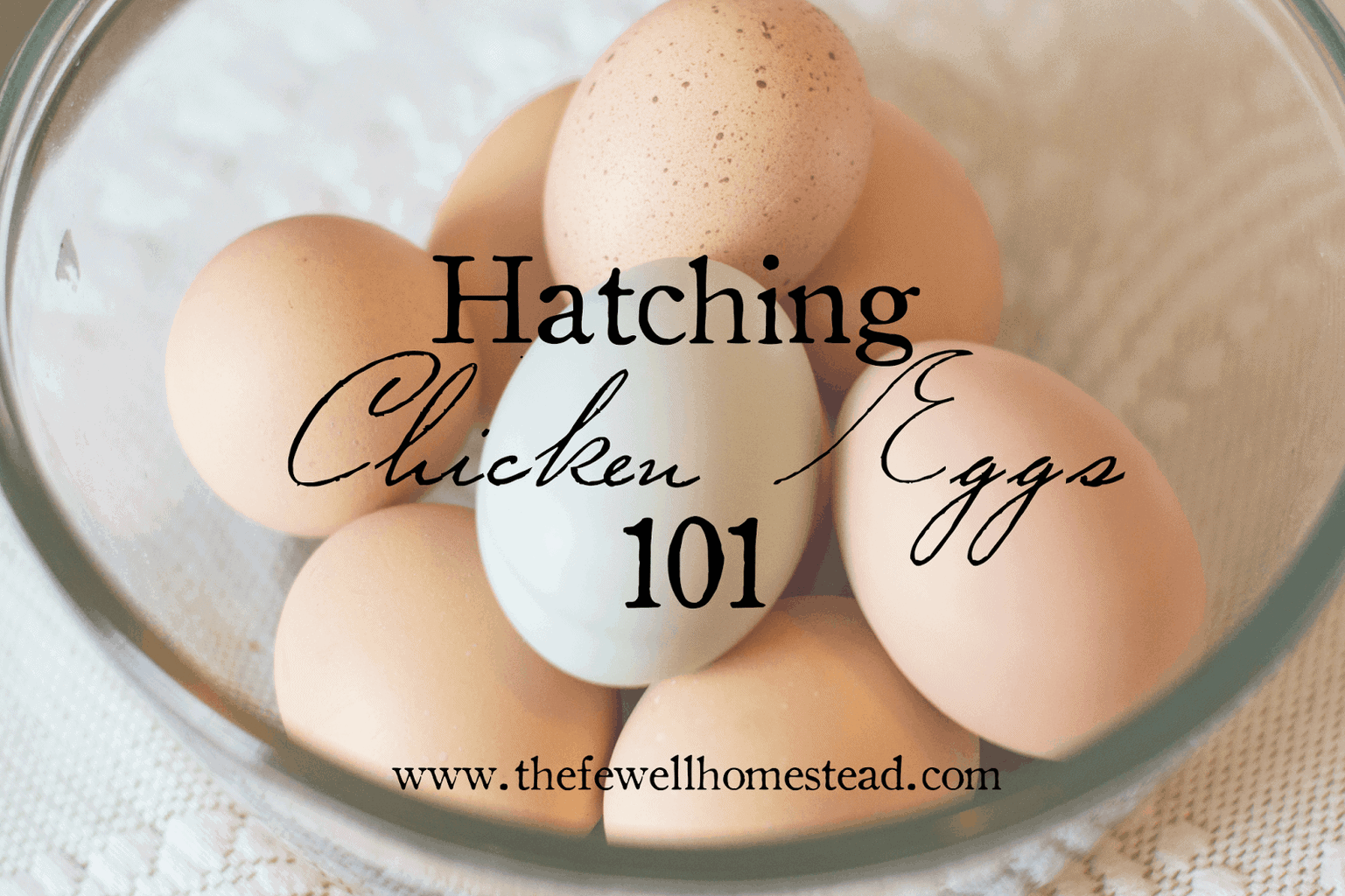 Hatching Chicken Eggs 101