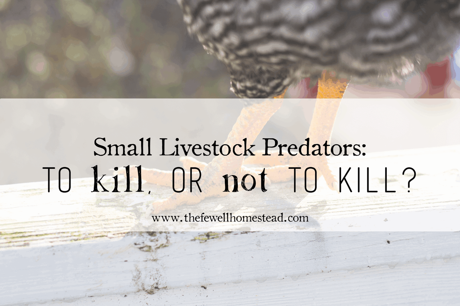 Small Livestock Predators: To kill, or not to kill?