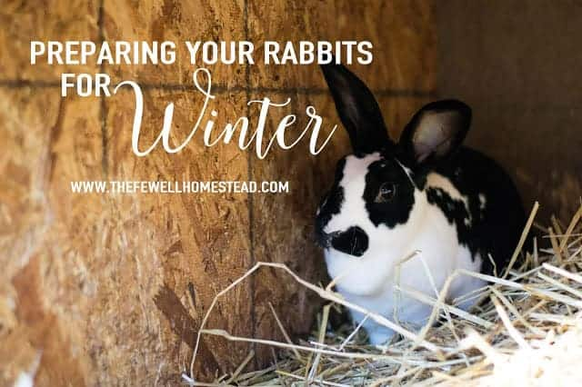 Preparing Your Rabbits for Winter