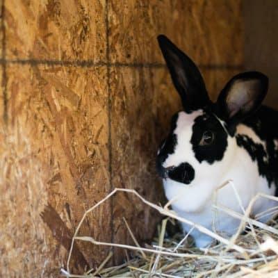 """Myth Debunked: """"Breeding Like Rabbits"""""""