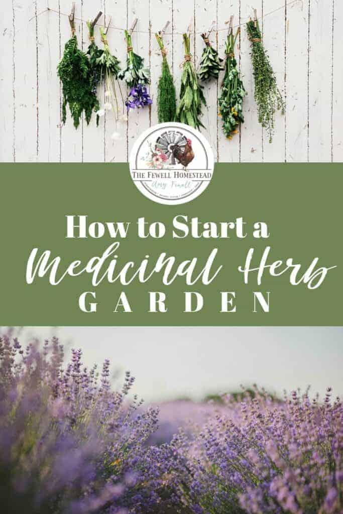 Start a Medicinal Herb Garden