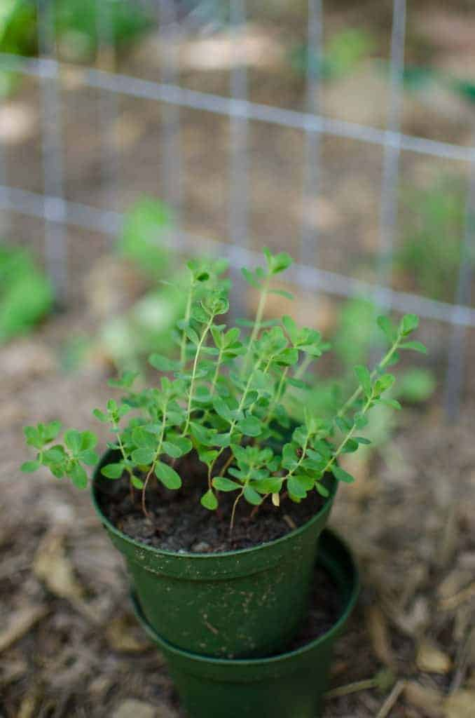 Make Money on Your Homestead by Selling Plants