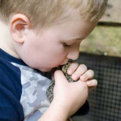 Why I Let My Child Help Process Animals on the Homestead