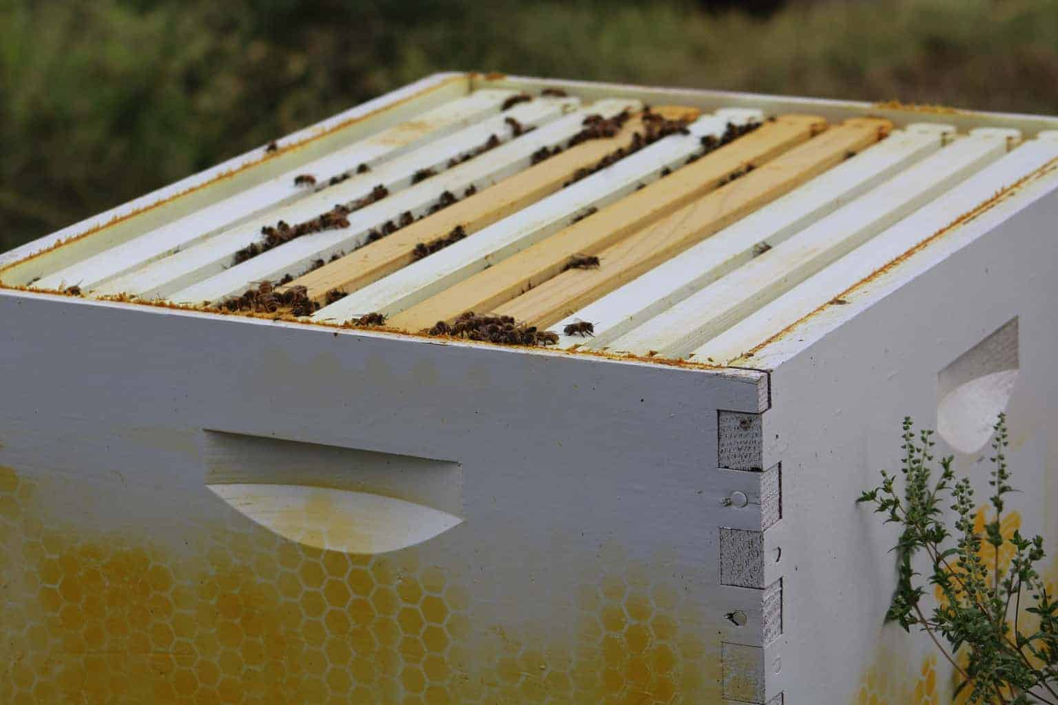 feeder utahbottomboard jones from bottom company parts feeders bee hive board screened
