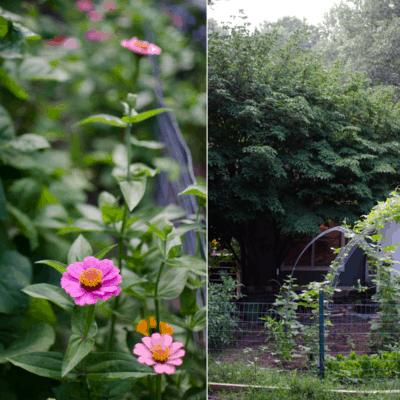 Expanding Our Farmhouse Kitchen Garden