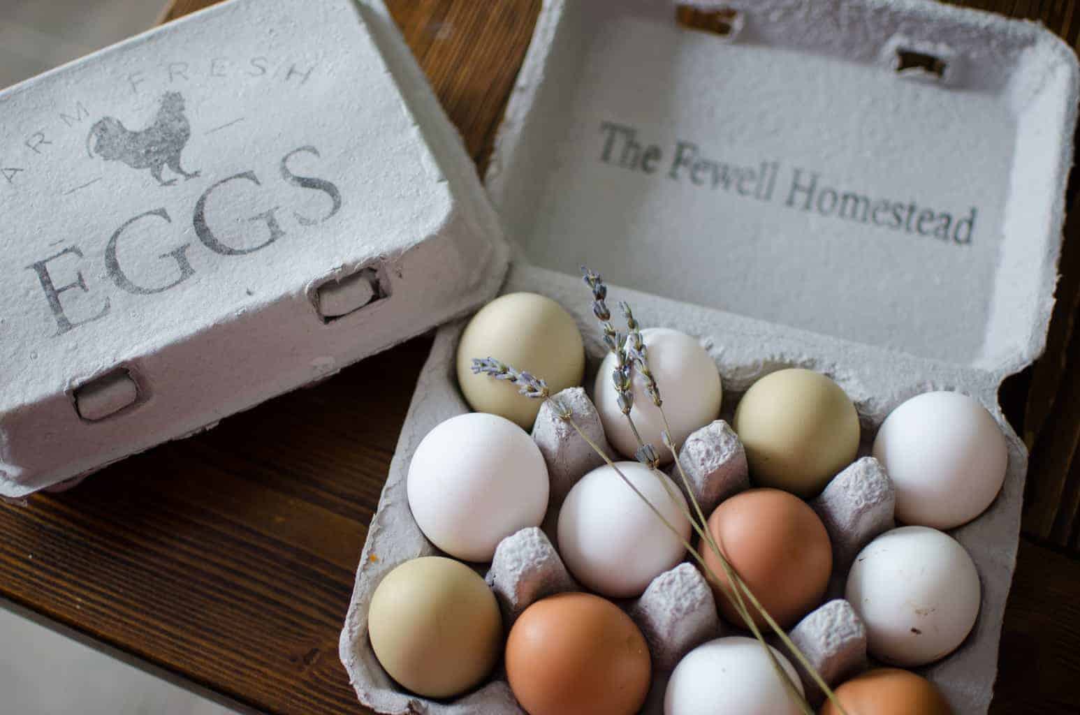 Is It Safe to Reuse Egg Cartons? Yes! | Eggs and Salmonella