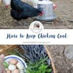 How to Keep Chickens Cool Naturally