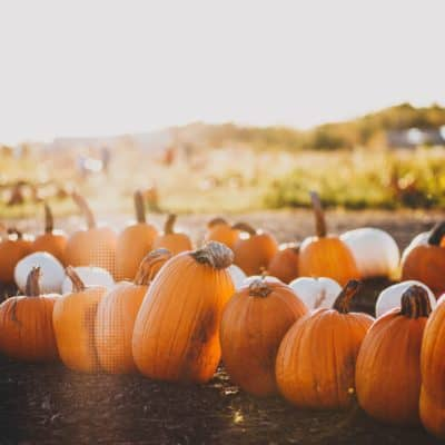 Are Pumpkin Seeds a Natural Dewormer for Chickens?