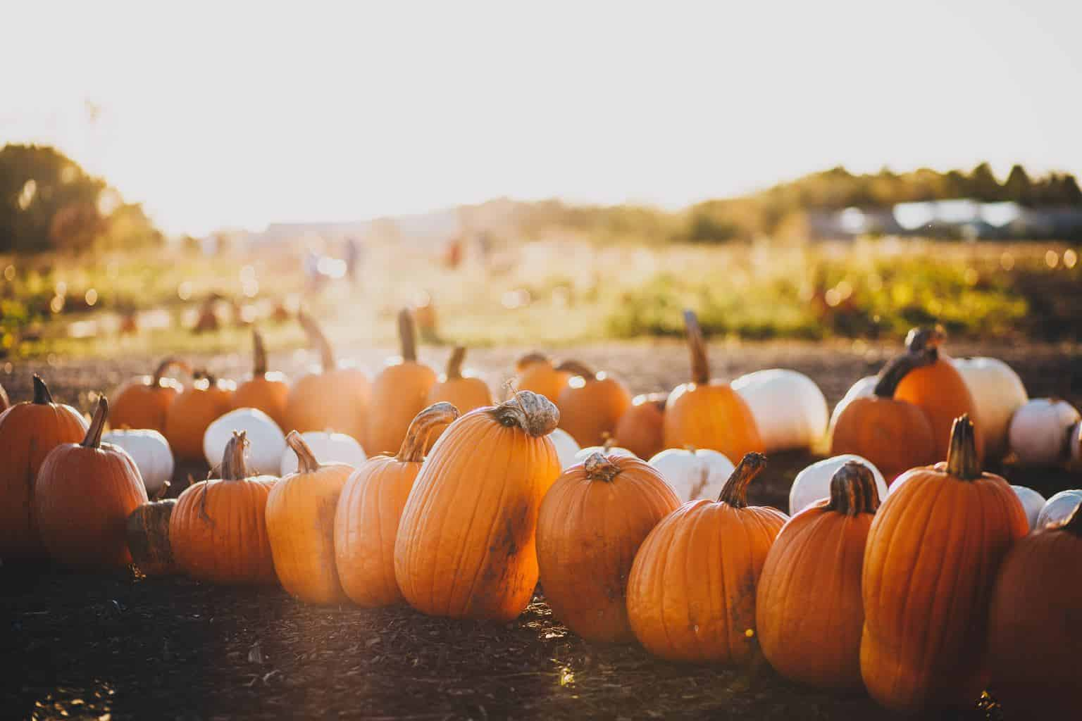 Are pumpkin seeds a natural dewormer for chickens? Let's talk about the truth!