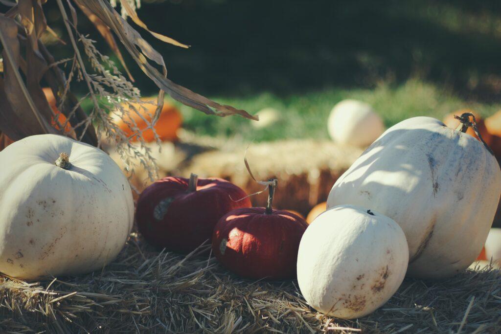 White Pumpkins for Making White Pumpkin Pie