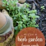 Grow Herbs from Seed