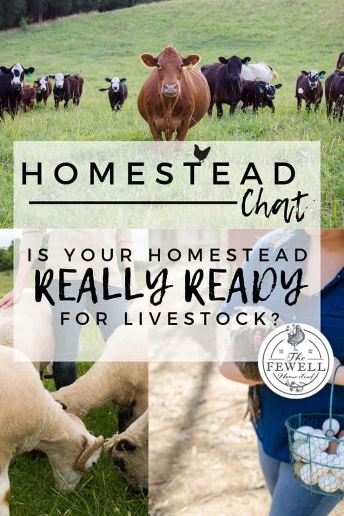 So you want some chickens? Maybe a dairy cow or some goats? But is your homestead REALLY ready for livestock? Let's have an honest homestead chat.