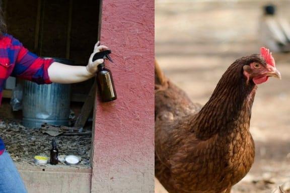 diy chicken coop cleaner