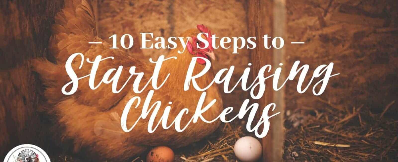 10 Easy Steps to Start Raising Chickens