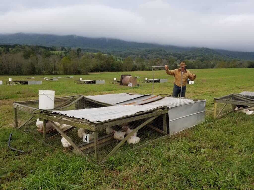 Raising Meat Chickens on Pasture