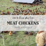 How to Raise Meat Chickens