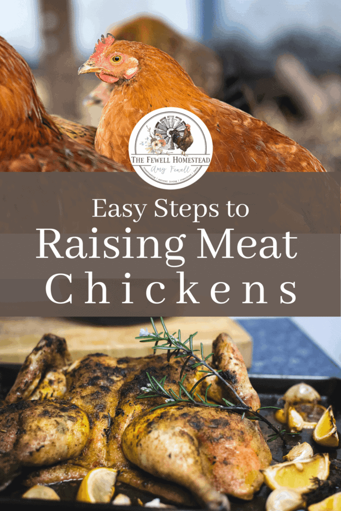 Easy Steps to Raising Meat Chickens