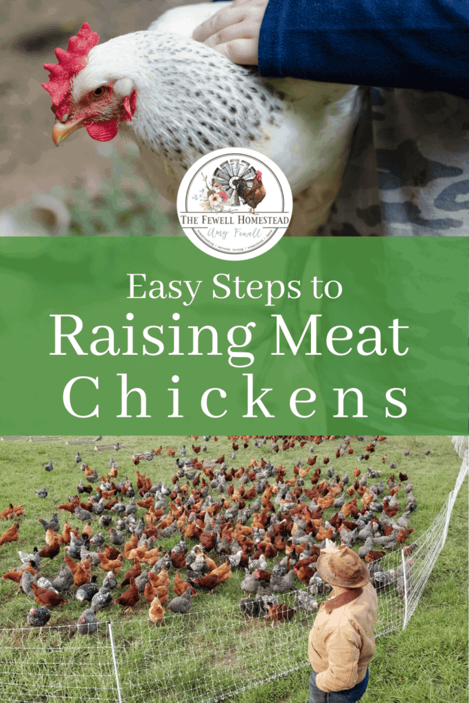 Easy Steps to Raising Chickens for Meat