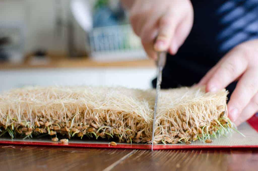 Flip your chicken fodder upside down before cutting.