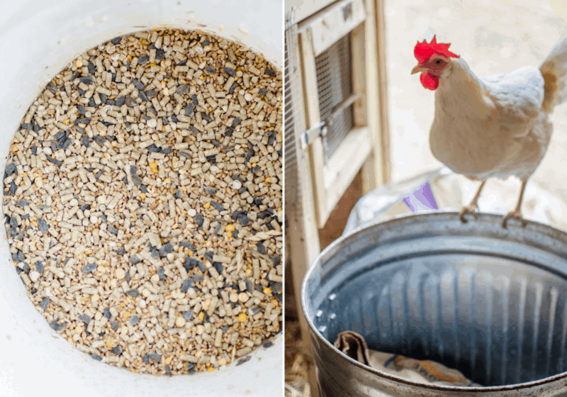 How Much Feed Do Chickens Eat?