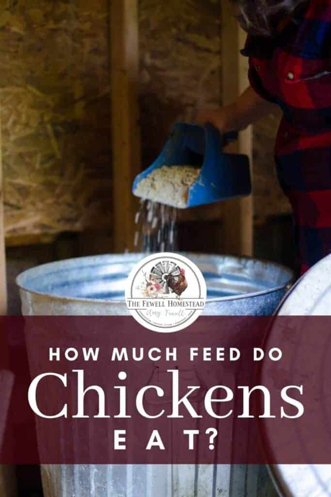How Much Feed Do Chickens Eat? Pin for Later!