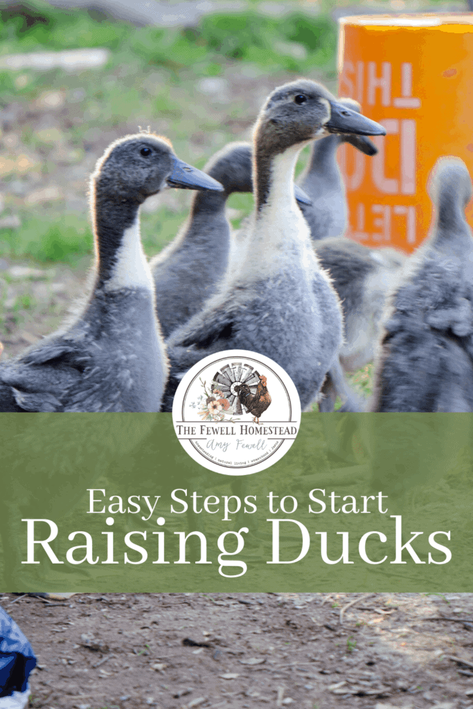 Start Raising Ducks with these Easy Steps