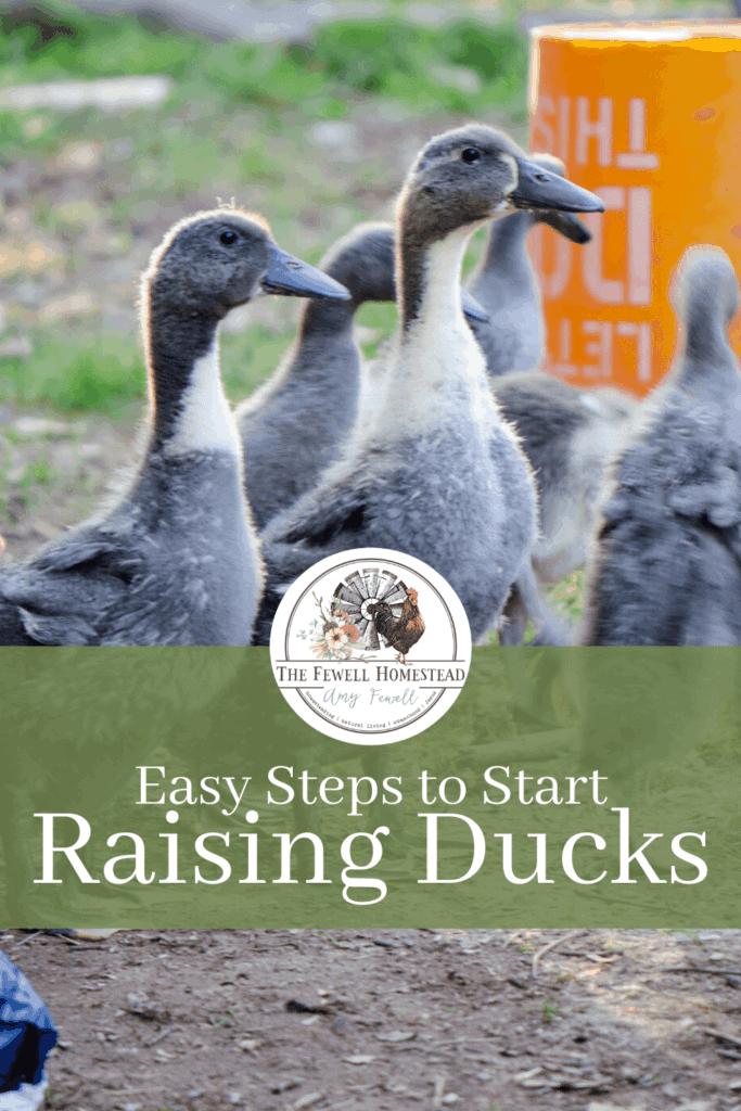 Start Raising Ducks with these Easy Steps