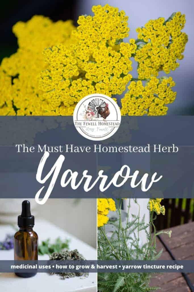 Make the Make Yarrow Tincture, Medicinal Uses of Yarrow
