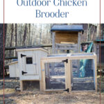 How to Set Up an Outdoor Chicken Brooder