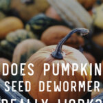 Pumpkin Seed Dewormer for Chickens