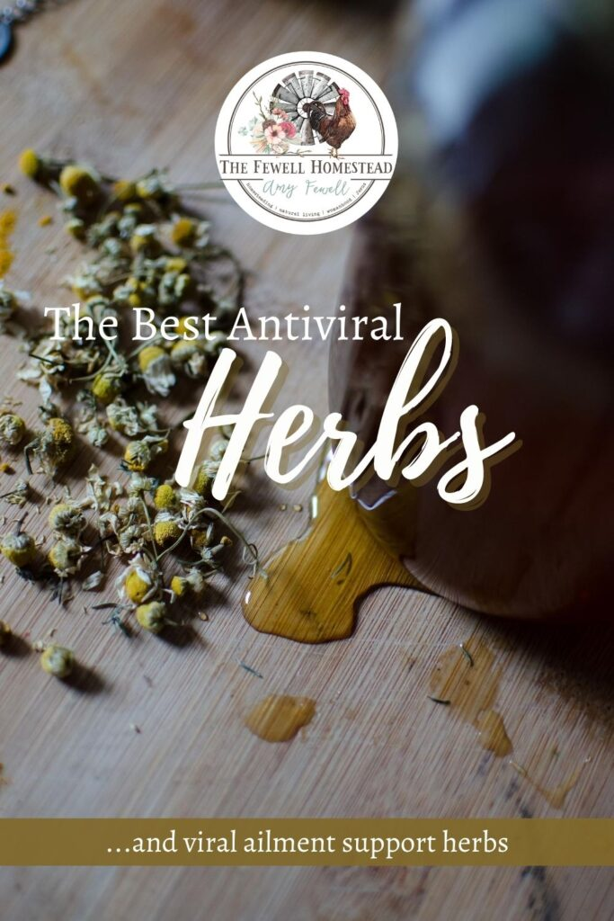The Best Antiviral Herbs, Natural Cold Remedies, natural antiviral herbs, herbal cold remedies