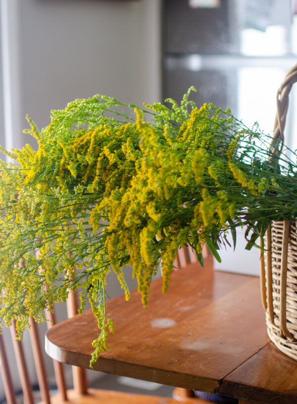 Medicinal Uses of Goldenrod & Goldenrod Tincture