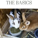 The Basics: Raising, Breeding and Processing Meat Rabbits