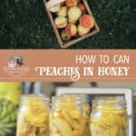 Canning Peaches With Raw Honey