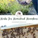 Using Herbs for Homestead Honeybees