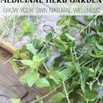 How to Start a Medicinal Herb Garden