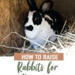 Rabbit Care Basics for the Beginner