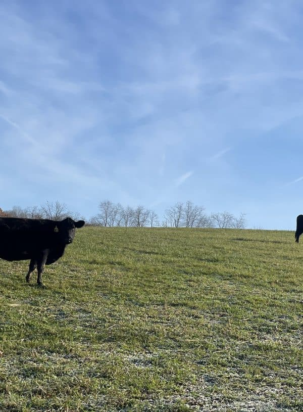 American Farmers & Homesteaders Competing with Foreign Land Ownership