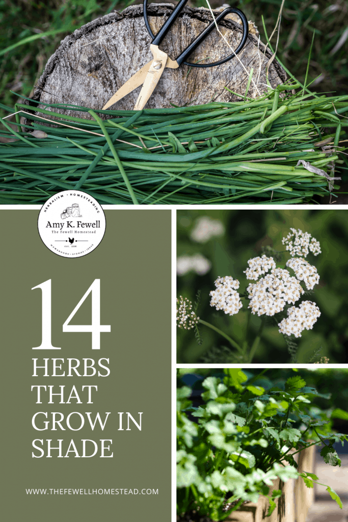 14 Herbs that grow in the shade