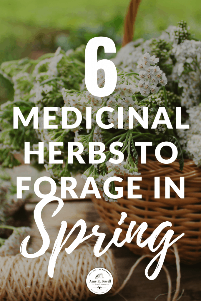 6 Medicinal Herbs to Forage in Spring
