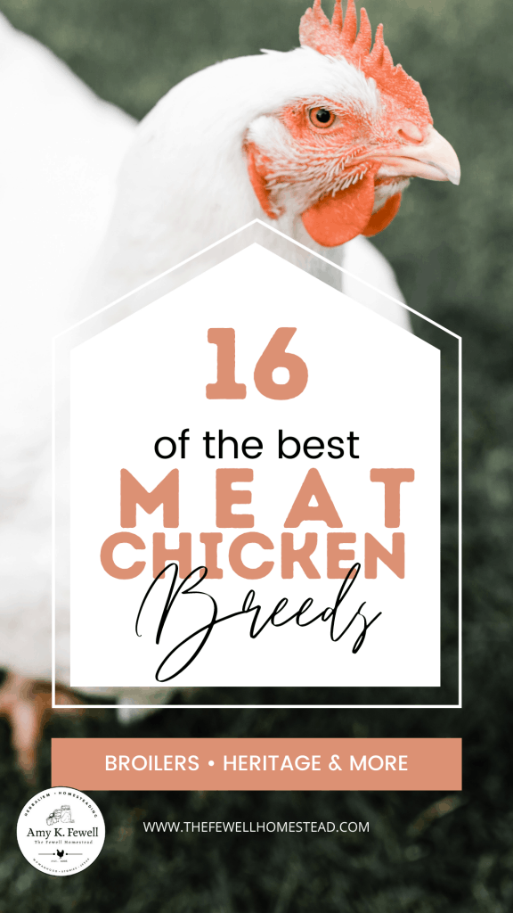 16 Broiler and Meat Chicken Breeds