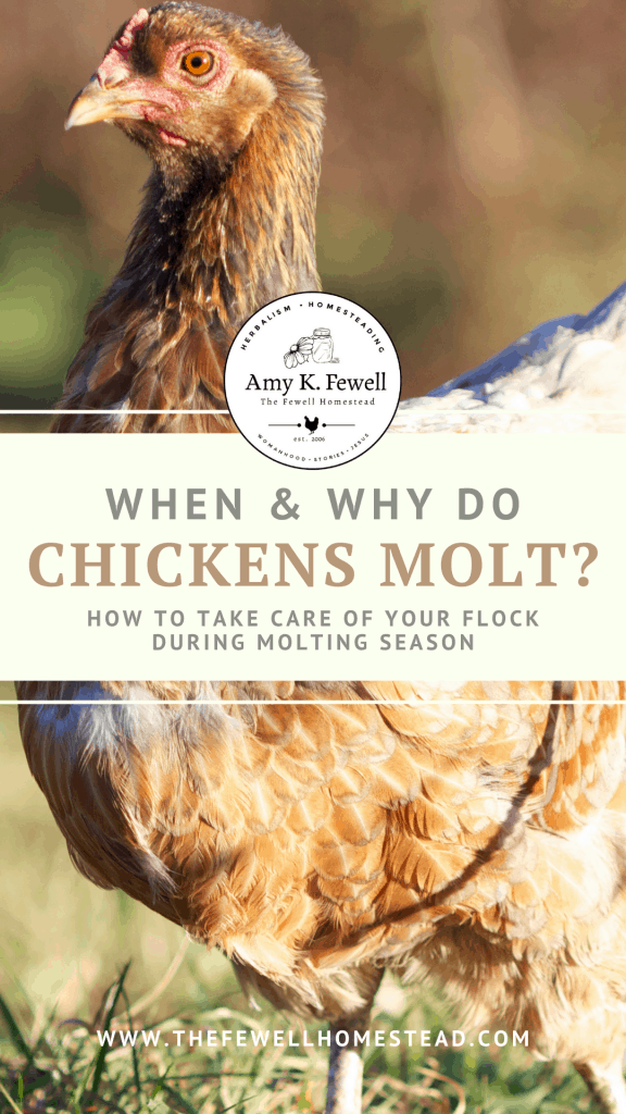 Why and When Do Chickens Molt